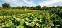 meine ernte bietet den eigenen Gemüsegarten zum Mieten